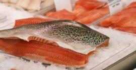 salmon-petition-envirotas